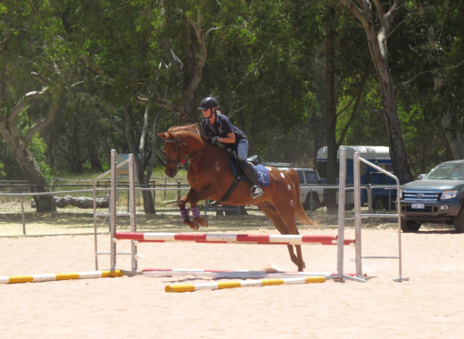 This magnificent Lunging the adult rider book properties turns